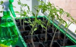 Средства для подкормки рассады томатов на рост и густоту при использовании