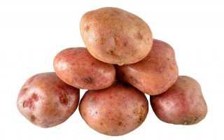 Картофель «Кураж» – описание сорта, фото, посадка и уход, достоинства и недостатки