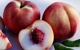 Персик Краснощекий — описание сорта и отзывы садоводов