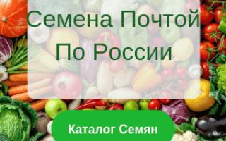 Лучшие сорта дыни для средней полосы России