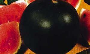Особенности выращивания раннеспелого арбуза Шуга Бейби