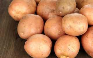 Картофель Ирбитский: описание сорта картофеля, фото внешнего вида, отзывы тех, кто его выращивал