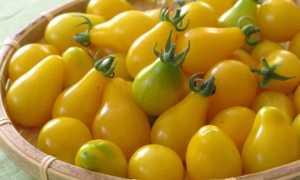 Сорта желтых томатов