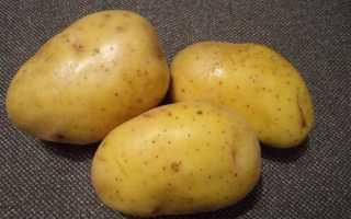 Картофель Крона — описание сорта, фото, отзывы, посадка и уход