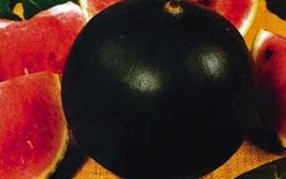 Как подобрать сорт и вырастить арбузы в Сибири