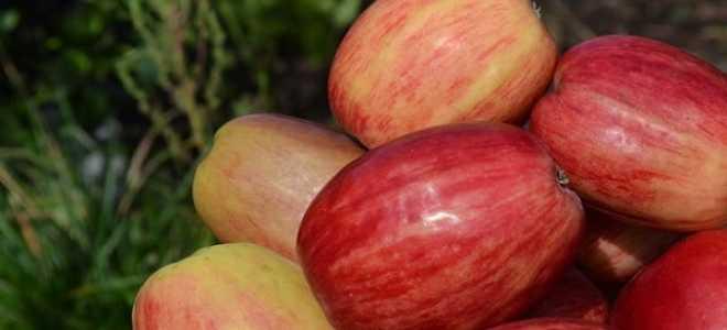 Яблоня Титовка — описание сорта, фото, отзывы