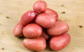 Картофель Журавинка — описание сорта, фото, отзывы, посадка и уход