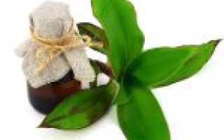 Настойка золотого уса на водке (спирте): рецепт и применение