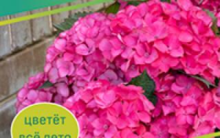 Алыча Ариадна — описание сорта, фото и отзывы садоводов