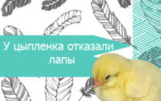Недостаточная недостаточность цыплята: причины и лечение Наши птицы
