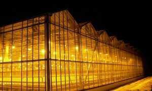Правильное освещение в теплице для огурцов