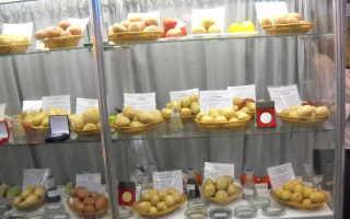 Сорта картофеля для Северо-Западного региона России