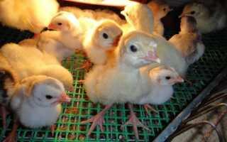 Витамины для кур – программа кормления кур от болезней