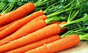 Лучшие озимые сорта моркови с фото и описанием