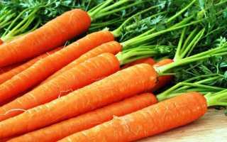 Лучшие позднеспелые сорта моркови