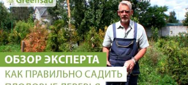 Посадка и ухода за алычей для начинающих и профессиональных садоводов