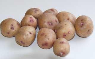 Картофель Красноглазка — описание сорта, фото, отзывы, посадка и уход