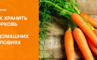 Как хранить морковь в домашних условиях в квартире на балконе?