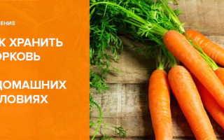 Уборка моркови и хранение ее в домашних условиях