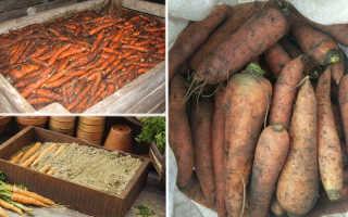 Как хранить морковь в яме в огороде?