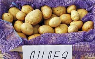 Картофель Лилия — описание сорта, фото, отзывы, посадка и уход