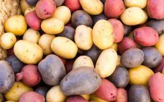 Среднепоздние сорта картофеля