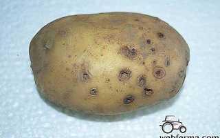 Как избавиться на картофеле от проволочника?