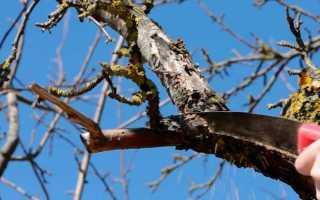 Когда лучше обрезать яблони: весной или осенью: секреты садоводов