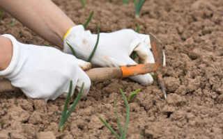 Что нужно вносить при посадке зимнего чеснока?
