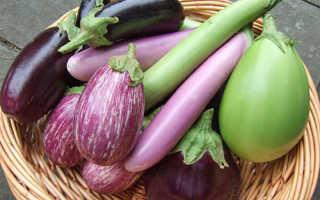 Зеленые сорта баклажан с описанием и фото