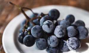 Виноград Конкорд Русский: описание сорта, фото и отзывы садоводов