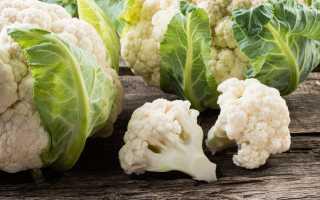Боится ли заморозков цветная капуста?