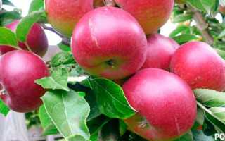 Как правильно посадить яблоню: советы садоводам