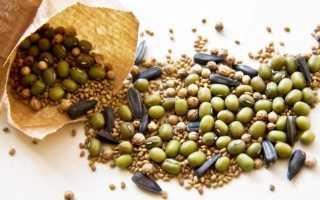 Как собрать семена кабачков правильно?