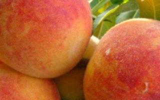 Персик Золотой Юбилей — описание сорта и отзывы садоводов