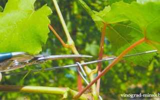 Зеленые операции на винограде весной