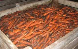 Почему морковь становится мягкой при хранении?