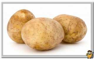 Картофель Мелодия — описание сорта, фото, отзывы, посадка и уход