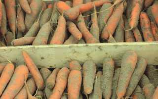 Как правильно хранить морковь в подвале зимой?