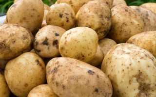 Картофель Санте — описание сорта, фото, отзывы, посадка и уход