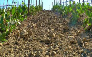 Какой должна быть почва для выращивания винограда?
