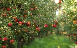 Черные гусеницы на яблоне — что делать?