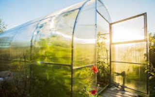 Как вырастить огурцы в теплице из поликарбоната?