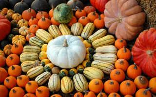 Урожай тыквы перед осенними заморозками: когда собирать урожай и как организовать хранение на зиму?