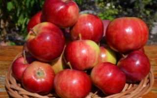 Яблоня Аксена — описание сорта, фото, отзывы