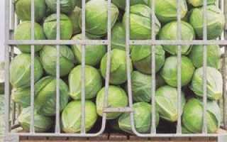 Как обрабатывают белокочанную и цветную капусту?