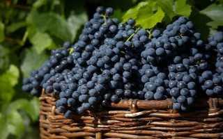 Виноград Загадка Шарова: описание сорта, фото и отзывы садоводов