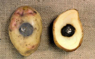 Почему картофель внутри чернеет?
