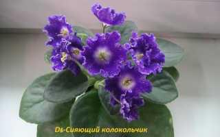 DS-Shiny Bell (Диметрис) – Форум цветоводов фрау Флора