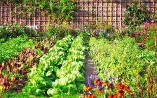 Что посадить после картофеля, чтобы земля отдохнула?